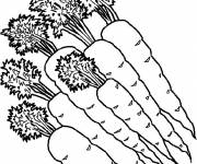 Coloring pages Carrots