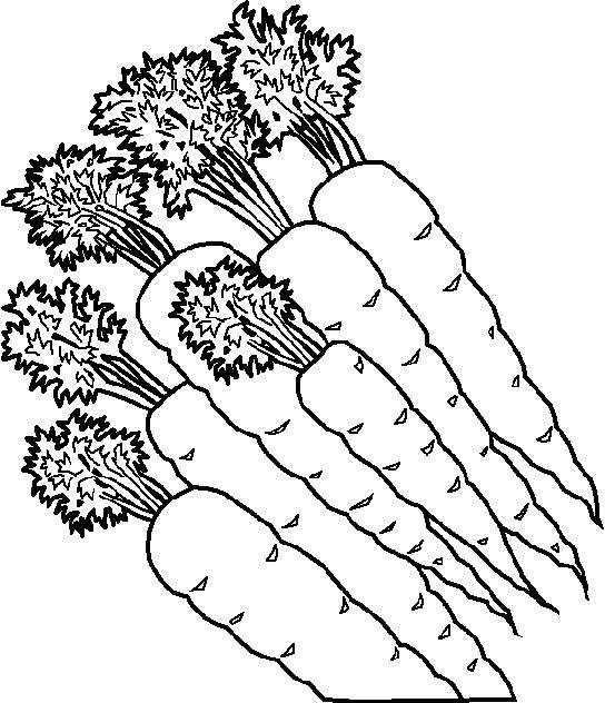 Free coloring and drawings Carrots Coloring page
