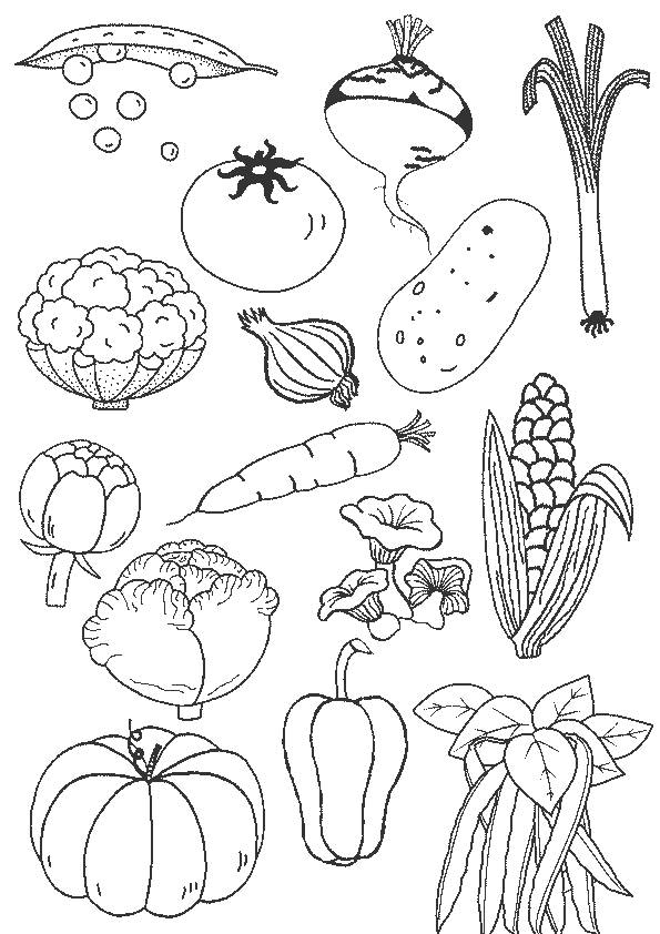 Free coloring and drawings Colored vegetables Coloring page