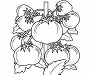 Coloring pages Tomato plants
