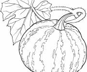 Coloring pages Watermelon