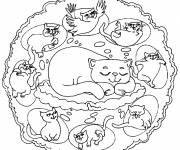 Coloring pages Colored Mandala Cat