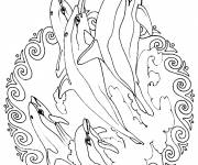 Coloring pages Dolphin Mandala