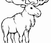 Coloring pages Animals Canada