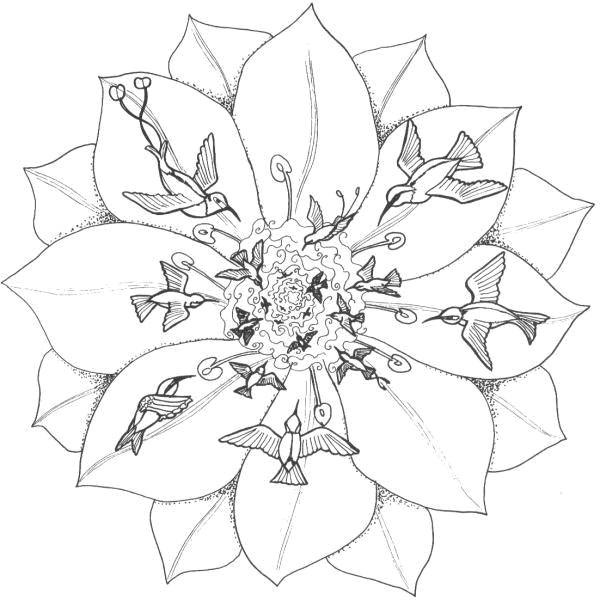 Free coloring and drawings Flower and Birds to relax Coloring page