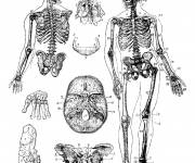 Coloring pages Vintage The Human Body