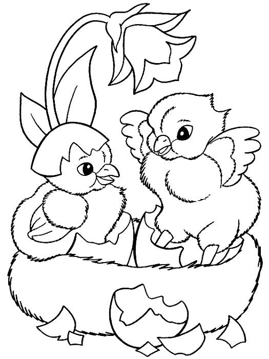 Free coloring and drawings Beautiful chicks Coloring page
