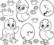 Coloring pages Easter chicks for download