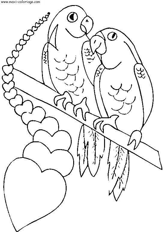 Free coloring and drawings Valentine Parrots Couple Coloring page