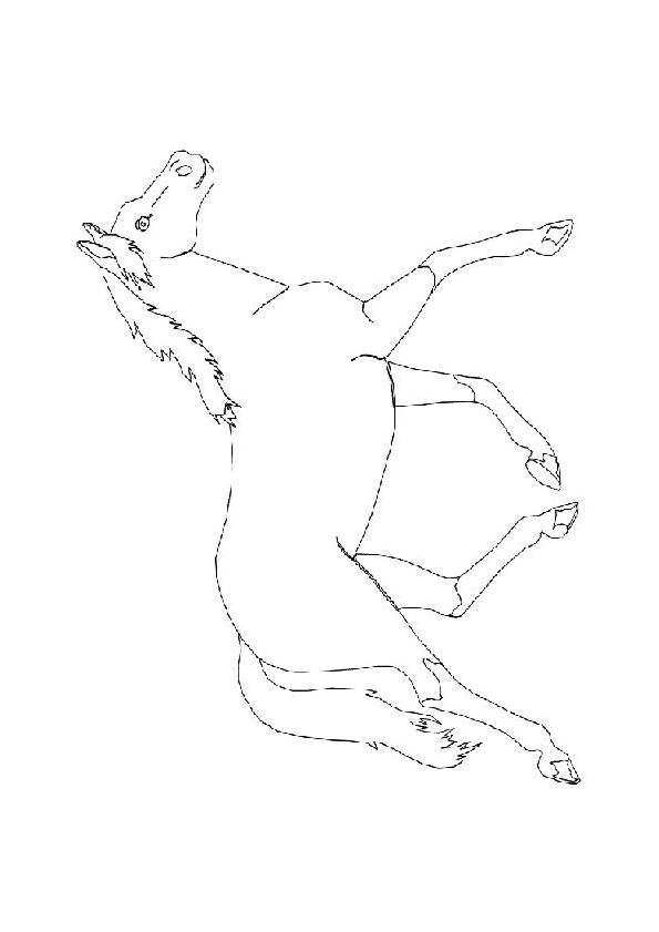 Free coloring and drawings A galloping horse Coloring page