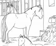 Coloring pages A horse and its cub in the stable