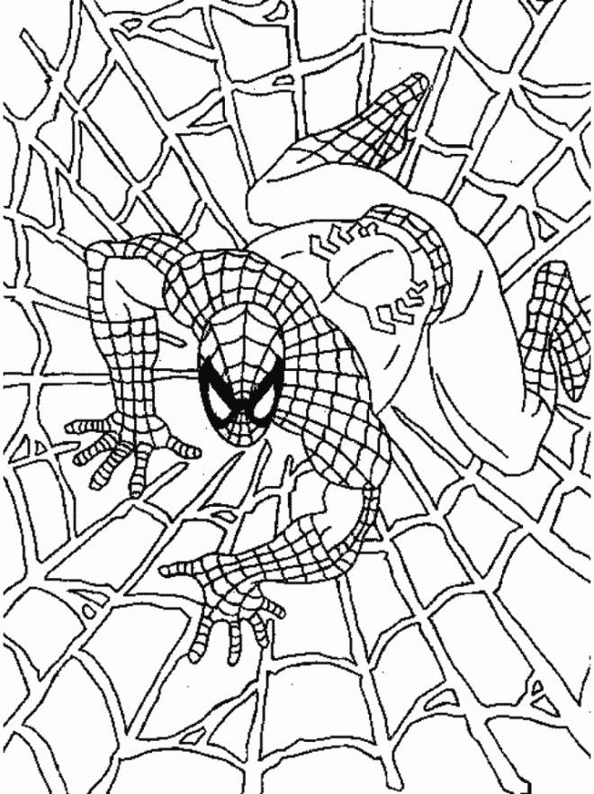 Free coloring and drawings Color spiderman Coloring page