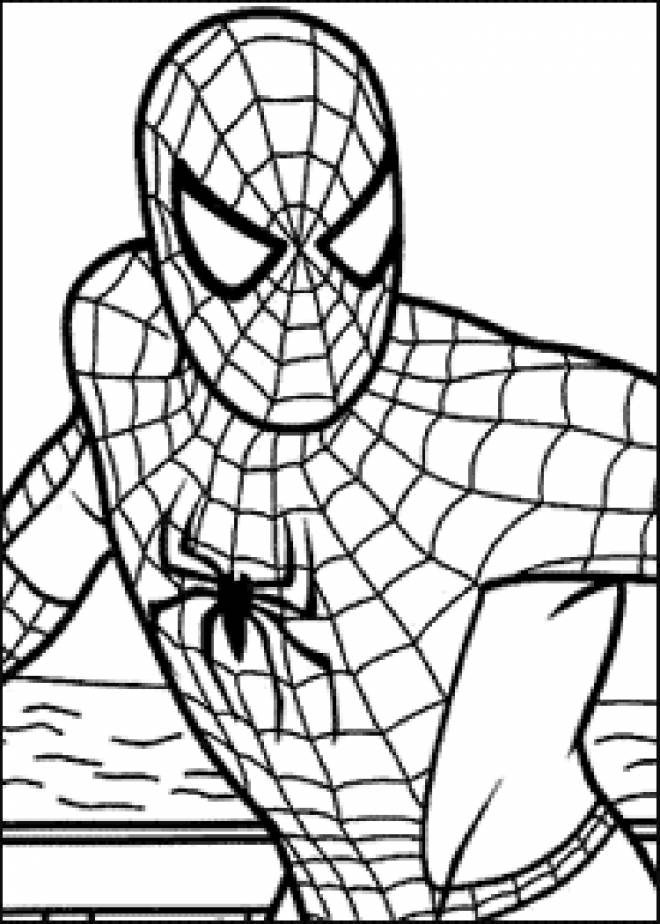 Free coloring and drawings Spiderman in vector Coloring page
