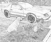 Coloring pages Sport Chevrolet